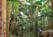 800x500-copy-right-forest-of-piccabeen-palm